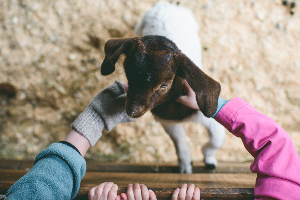 Kids petting baby goat Easter